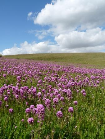 Wilde bloemen Stockfoto