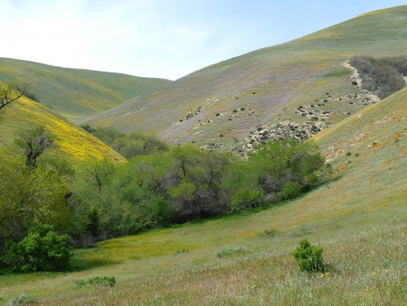 De lente is aangekomen met kleuren op de heuvels