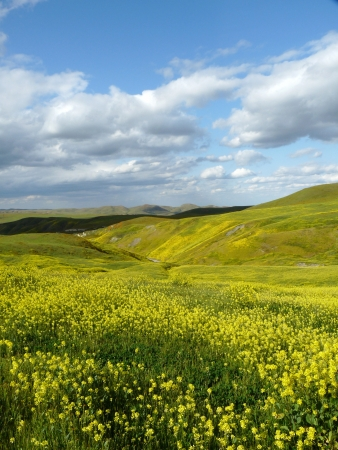 Gele heuvels bij de lente