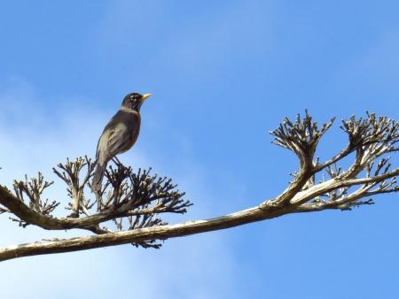 animal limb: Bird on a tree limb Stock Photo