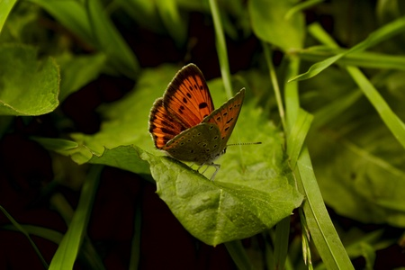 colouration: a butterfly in the grass