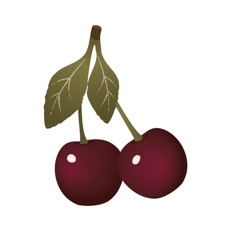 pulpy: Cherries on white background. Illustration
