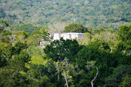 Calakmul view from top