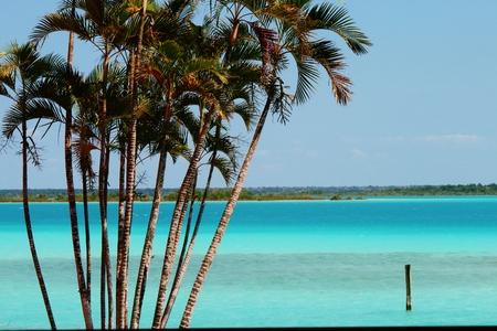 green sea and palm trees Yucatan Mexico