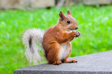 sitting squirrel Stock Photo - 5281435