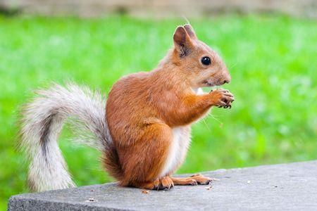 sitting squirrel photo