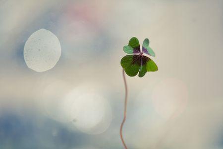 4 つ葉のクローバー、緑