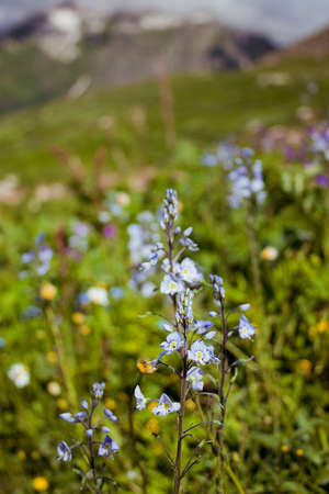 Flowers in the mountains photo