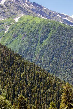 dombay: Caucasus Mountains. Region Dombay Stock Photo