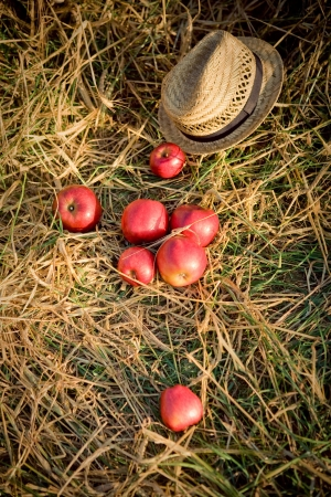 apples and hat on wheat field photo