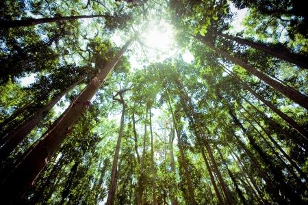 緑の森で古い木