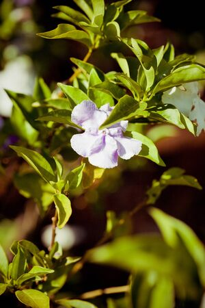 asian flowers photo