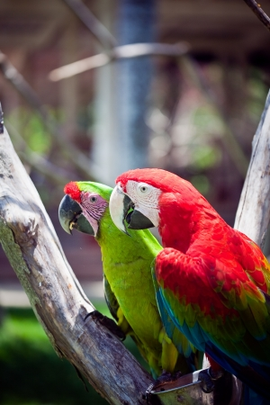 macaw  parrot sitting on branch  photo