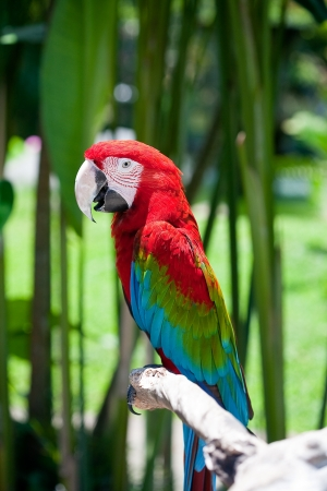 parrot sitting on branch photo