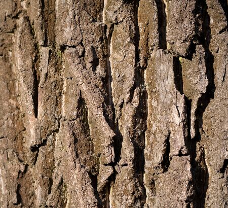 Detail of tree bark photo
