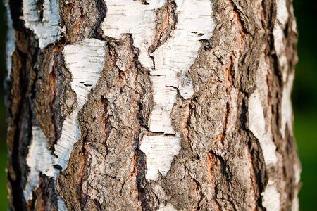 Detail of tree bark  photo