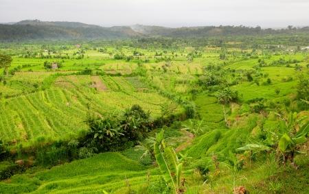 Rice Fields, Bali, Indonesia Stock Photo - 20549654