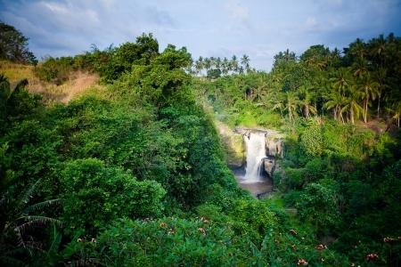 Waterfall in tropical forest in Bali, Indonesia Standard-Bild