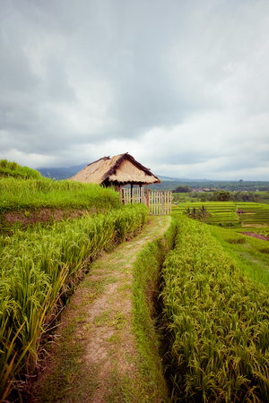 Rice Fields Terrasse dans l'�le de Bali, en Indon�sie photo