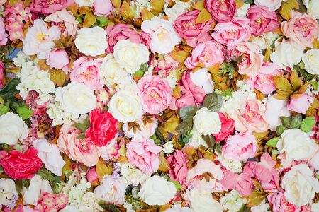 Pattern of fresh colorful roses photo