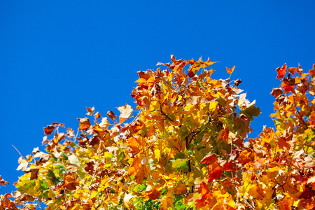 autumn background: Autumn leaves with the blue sky background