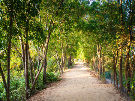 avenue of trees in the park in Cambodia Stock Photo