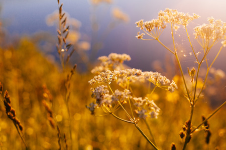 Retro Vintage Soft Focus With Grass And Flowers and Lens Flare