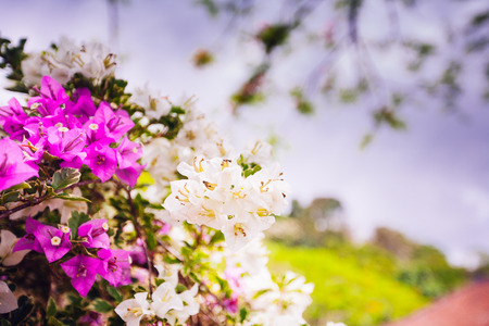 asian flowers  on natural background