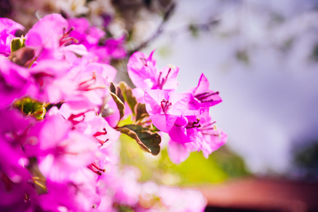 asian flowers  on natural background Banque d'images - 122117026