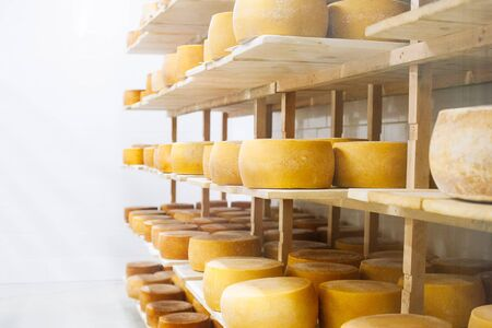 Cow milk cheese, stored in a wooden shelves and left to mature. Handmade product Archivio Fotografico