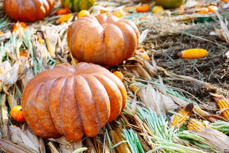 Pile of pumpkins sold at a market for halloween. Autumn decorations, pumpkins in various shapes and sizes
