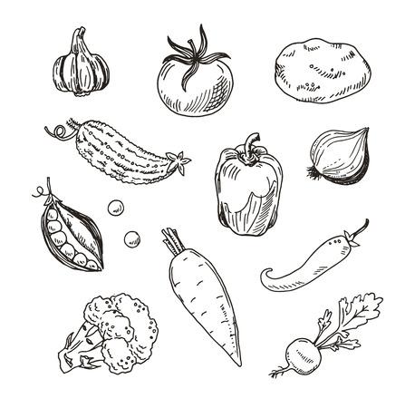 zanahoria: Dibujado a mano verduras conjunto boceto Vectores