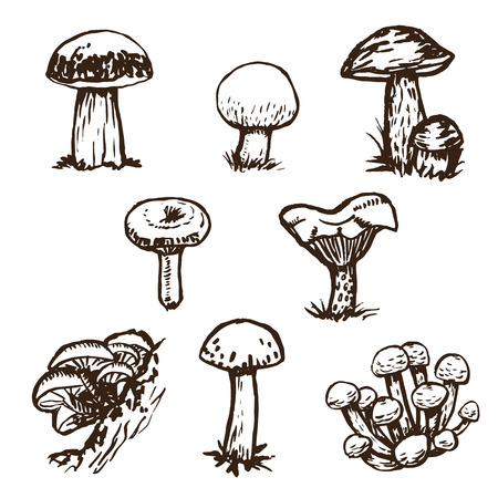 Hand drawn mushrooms sketch set.