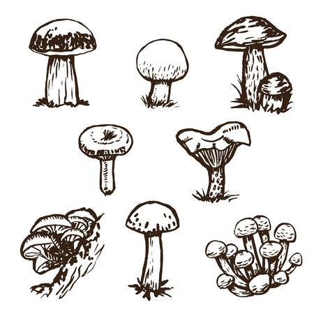 Hand drawn mushrooms sketch set.