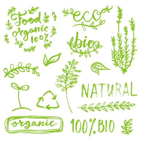 Hand drawn organic collection for eco design Illustration