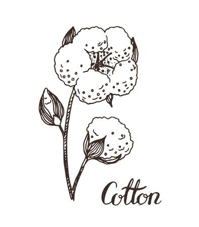 cotton: Hand drawn cotton sketch set