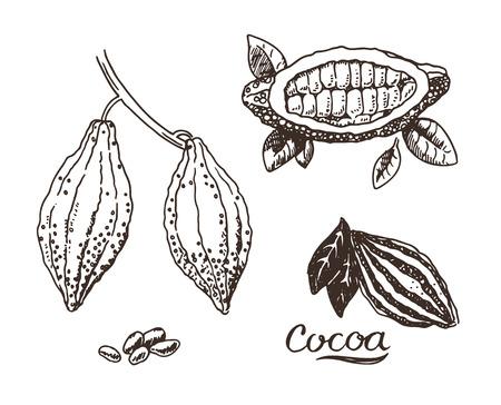 grano de cafe: Mano de cacao elaborado ilustración boceto Vectores