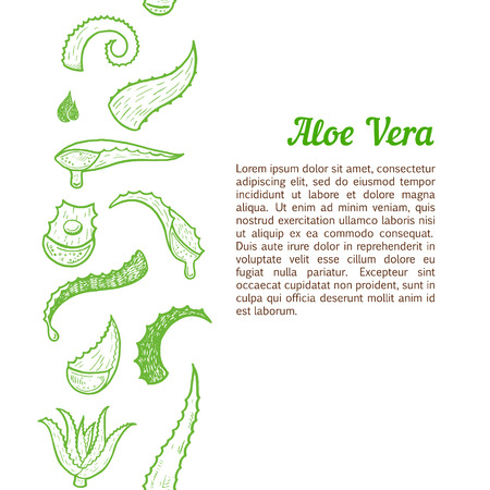 aloe vera plant: Vertical seamless background with hand drawn aloe vera leaves.