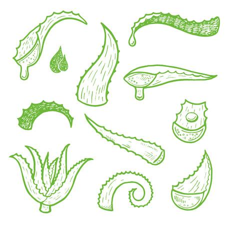 Aloe vera vector hand drawn sketch set. Healing and cosmetics herb.