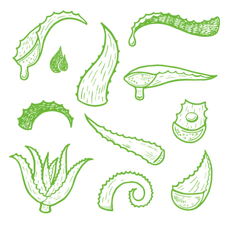 Aloe vera vector hand drawn sketch set. Healing and cosmetics herb.