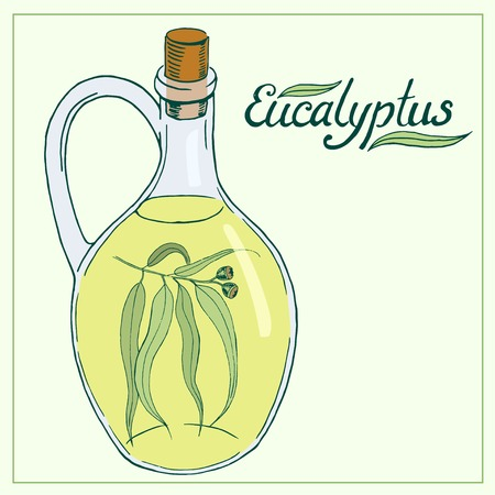 eucalyptus: Eucalyptus leaves and branch with glass jar hand drawn vector illustration