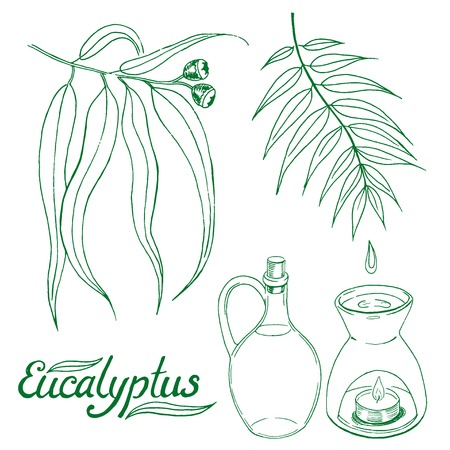 ether: Eucalyptus leaves and branch with glass jar and oil burner. Hand drawn sketch vector set.