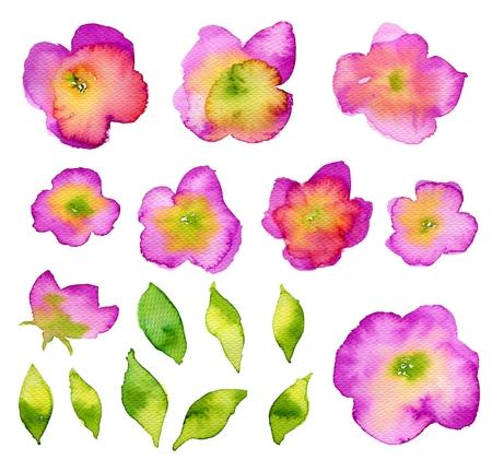fleur cerisier: collection de fleurs Aquarelle