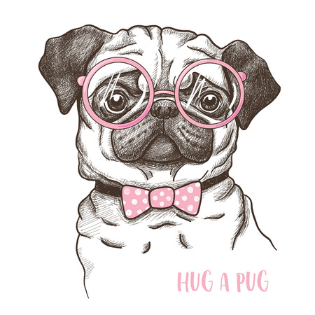 illustration of a hand drawn funny fashionable pug