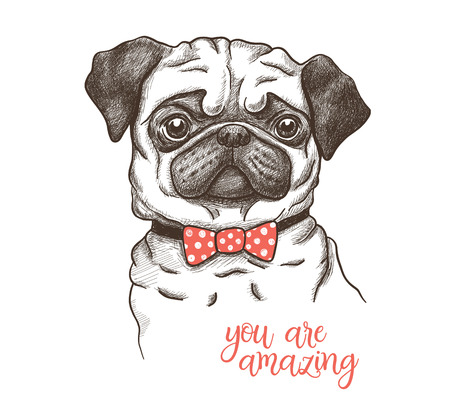 Vector illustration of a hand drawn funny fashionable pug