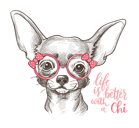 hand print: Girl Chihuahua illustration print. Cute fashionable dog vector sketch.