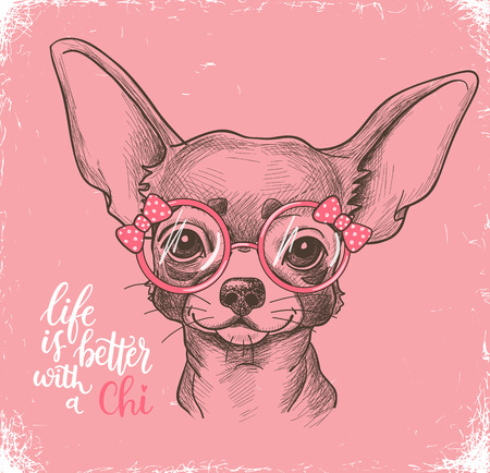 Girl Chihuahua illustration print. Cute fashionable dog vector sketch.