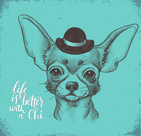 drawing: Girl Chihuahua illustration print. Cute fashionable dog vector sketch.