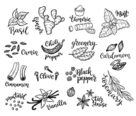 Set of hand drawn spices.