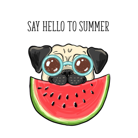 Say hello to summer. Vector illustration of a happy pug in glasses eating watermelon Çizim